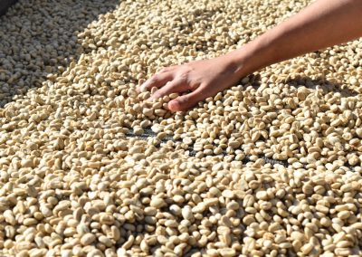 coffee beans with a hand moving them around